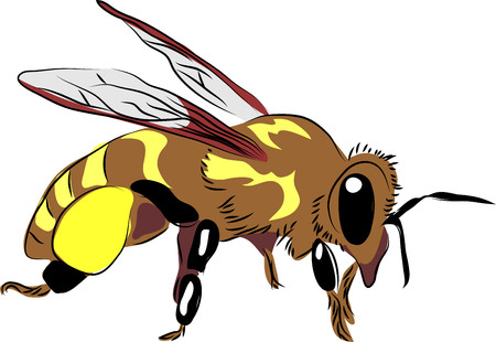 Honey bee icon on white background. Vector illustration.