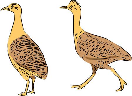Tinamou birds icon on white background. Vector illustration.