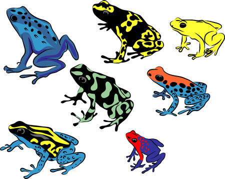 Dendrobates - poison dart frogs