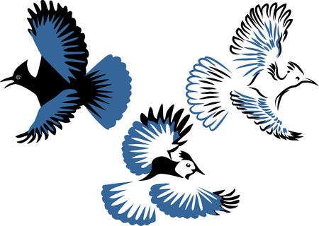 Stellers jay - vector illustration