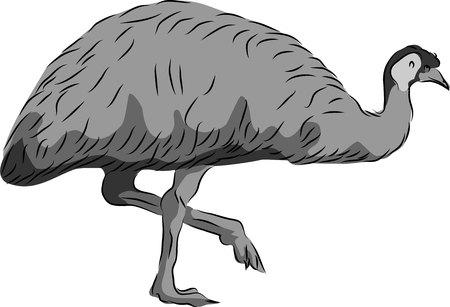 Emu Ilustração