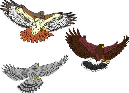 Autour des palombes volant - illustration couleur
