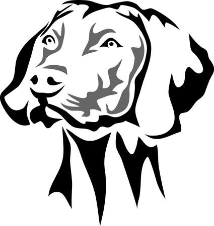 Pointer dog portrait