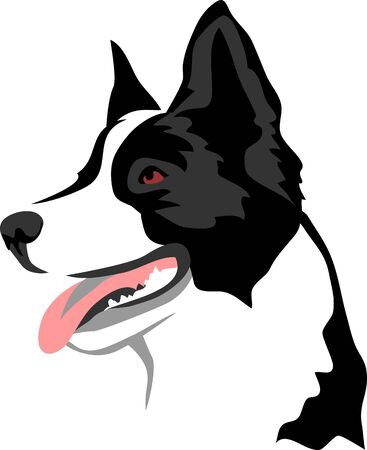 Border Collie - Vector Illustration