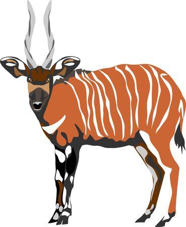 Bongo antelope - vector illustration Çizim