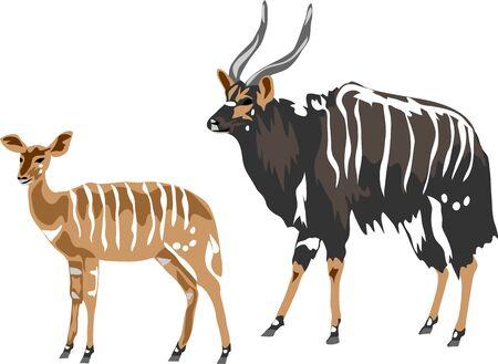 Nyala - illustration vectorielle