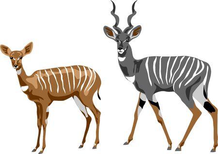 Lesser Kudu - Vector Illustration