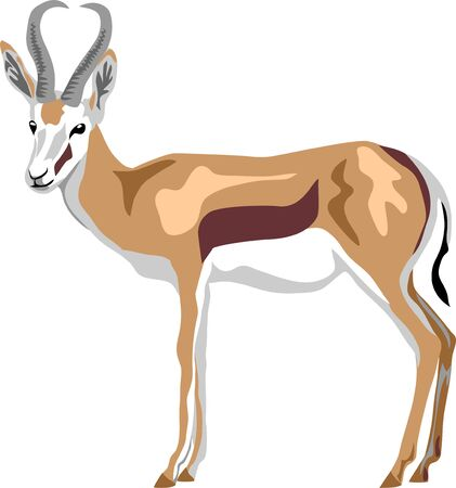 Springbok antelope - vector illustration