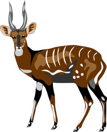 Bushbuck - vector illustration