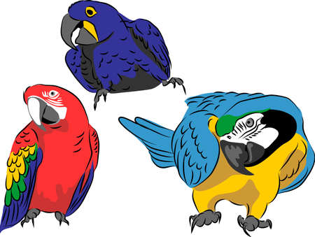 Macaws - color vector illustration