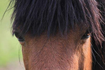 glance: Horse glance. Stock Photo