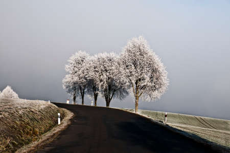 Three frosted trees on the road Stock Photo