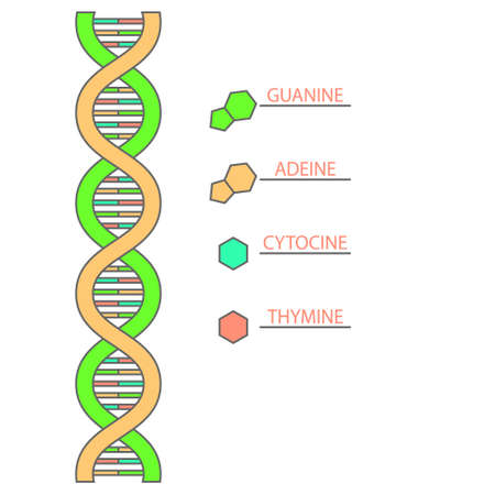 Simple dna structure infographic on white background Çizim