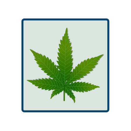 Original vector image of a hemp leaf in a square frame. Imitation of realism. The main part for the infographics of the beneficial properties of cannabis. Vectores