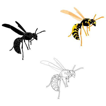 Vector illustration of a wasp in three variations line, silhouette, realism.