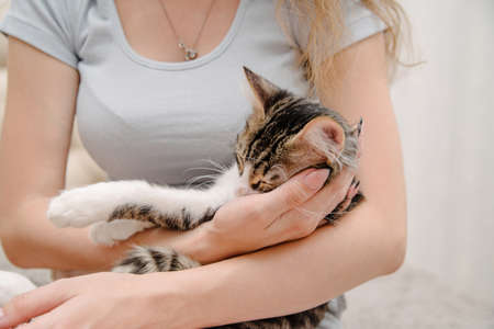 Young woman holding cat on hands. Girl with cat.Beautiful young woman with cat resting at home.Pets and people Фото со стока