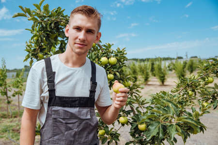 A farmer holding an apple. Happy young male farmer in overalls is on duty in the hands of a ripe apple.