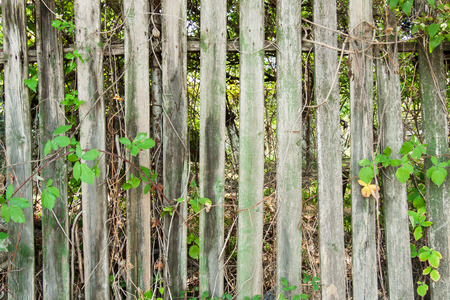 Old grungy wooden fence with green plants.
