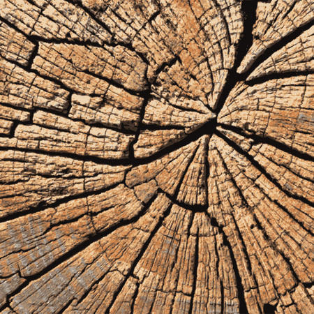 wood cross section: Old Cracked Tree Trunk Cross Section - Illustration