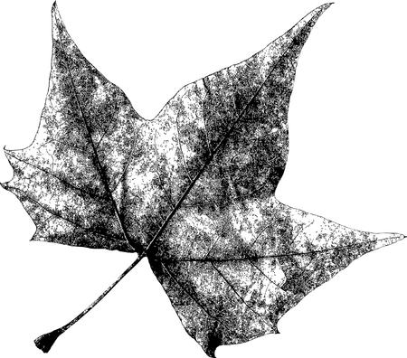 defined: Dry Maple Leaf - is Adobe Illustrator 10 compatible EPS file, defined in CMYK color mode.