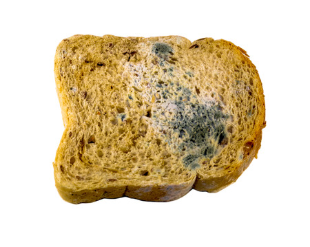 A closeup view of a piece of gray bread with blue and green mold isolated on white background