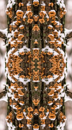 snowed: Kaleidoscopic pattern from snowed tree mushrooms in winter Stock Photo