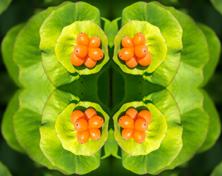 Kaleidoscopic pattern of wild orange berries with bright green leaves