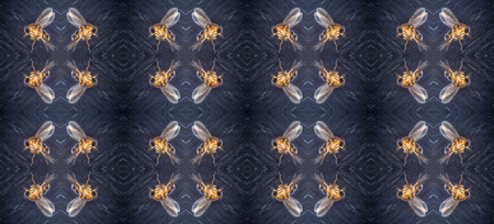 grooves: Kaleidoscopic pattern of small dead fly on aluminum foil with textured grooves