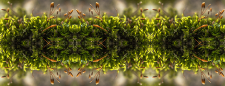 Kaleidoscopic close up view of green moss