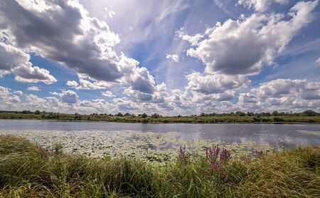 klyazma: Wide angle view of a summer swamp and cloud reflections in water among yellow water lilies
