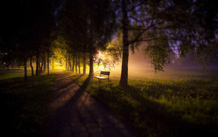 soften: Soften edge view of night bench in mist dark tree alley with lamps and long shadows
