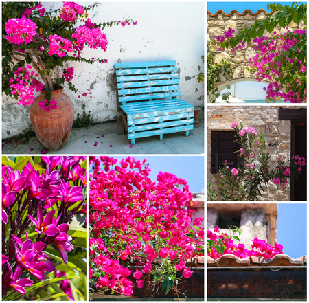 Collage image of various pink flowers of summer Cyprus