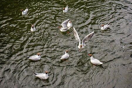 Feeding of flock of white seagull birds in summer Saint Petersburg Standard-Bild - 140372439