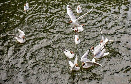 Feeding of flock of white seagull birds in summer Saint Petersburg Standard-Bild - 140372530