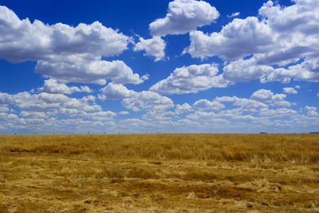 Yellow harvest field and blue sky with clouds, Australia photo