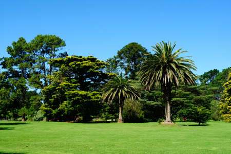 Australian green park landscape with beautiful trees