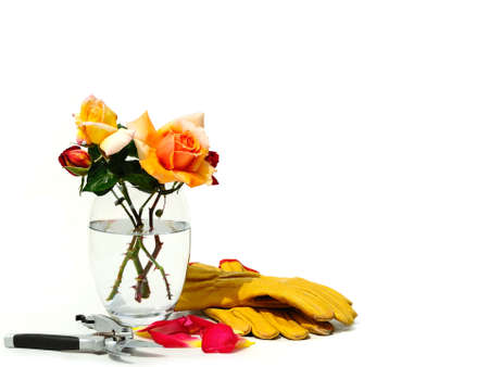 Gardening tools with fresh roses on white background, garden concept Stock Photo