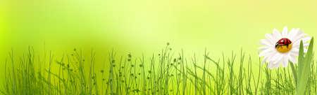 Bandeira do verão com fundo brilhante, margarida e joaninha