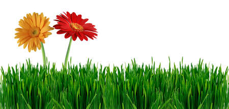 Summer banner with grass and flowers isolated on white background