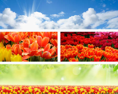 Set of four banners with bright sky and colorful tulips Stock Photo