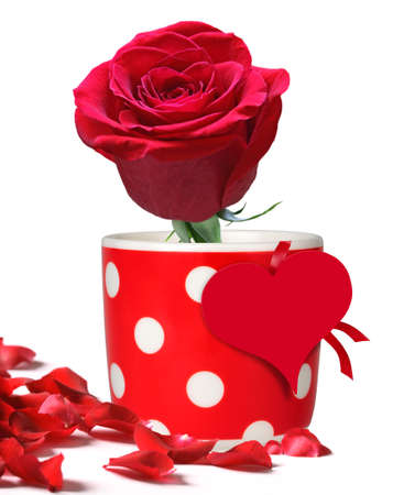 Red rose for Valentines Day, Christmas, Birthday or Mothers Day  photo