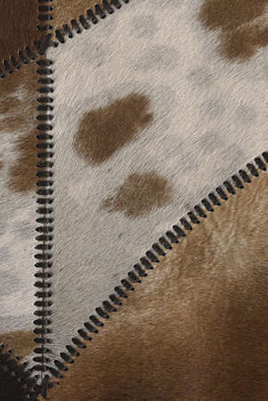 fur: Cow fur or skin background or texture
