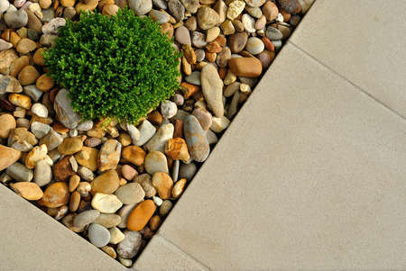 Landscaping combinations of plant, pebbles and paving