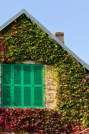 Green window covered with colorful ivy, against blue sky