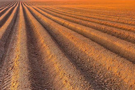furrow: Agricultural background of newly plowed field ready for new crops