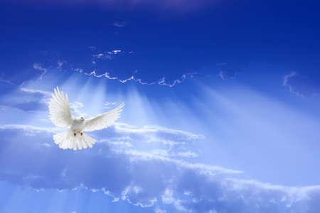 劇的な空を飛んで広げた翼で飛ぶ白い鳩 写真素材