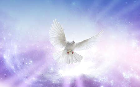 fede: Colomba bianca in un cielo blu viola Archivio Fotografico