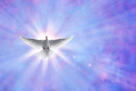 White dove in a blue purple sky, symbol of faith Stock Photo