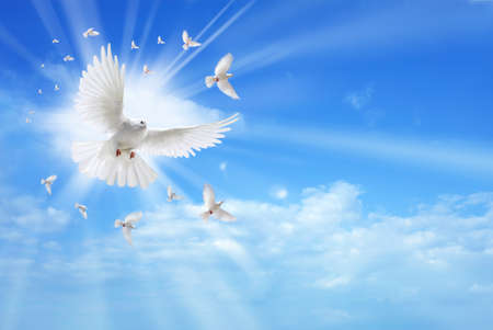 spiritual light: White dove in a blue sky, symbol of faith