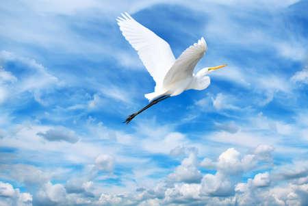 genera: Beautiful tropical crane in flight against blue sky